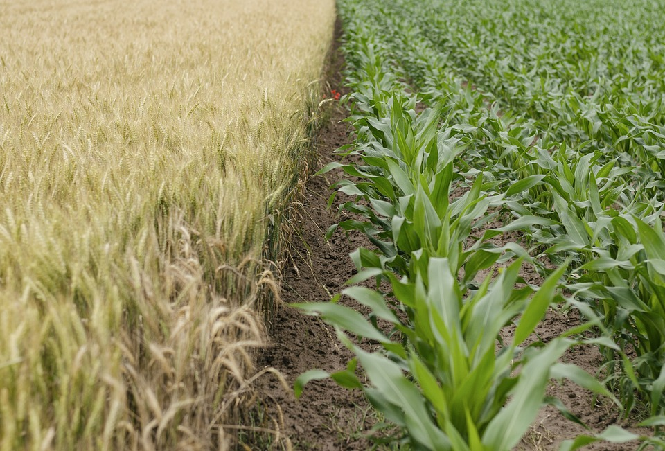 agriculture-1836424_960_720